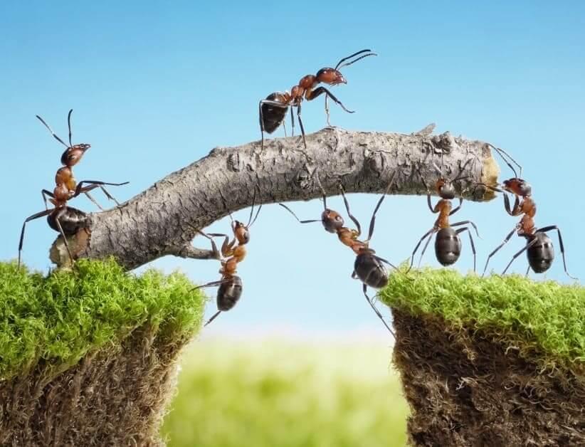 Argument 6: an enterprise social network stimulate collective intelligence